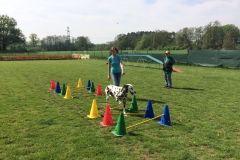 Cavaletti Training