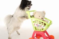Trick Dog Bilder