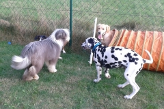 Welpen- und Junghundespielgruppen